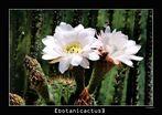 [botanicactus]