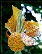 Botanik.......