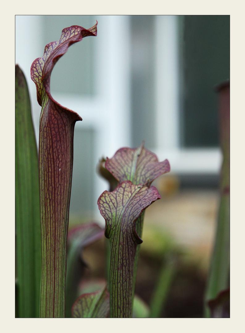 Botanik im Bild