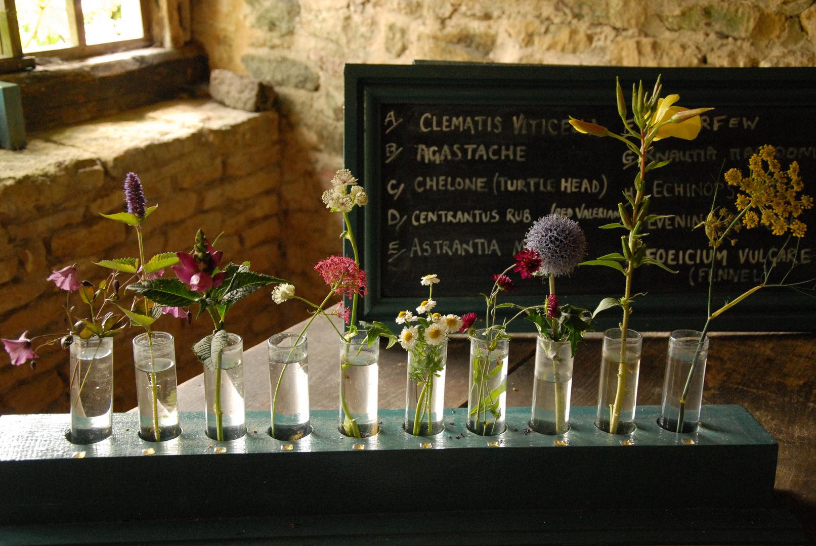 Botanikunterricht