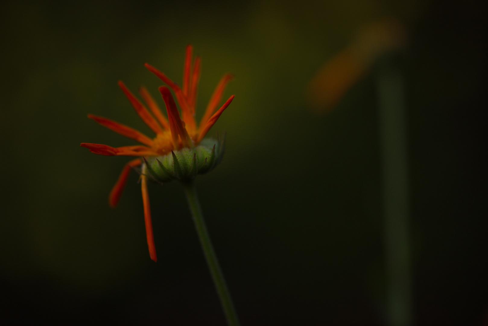 Botanische Nacht