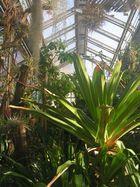 Botanischer Garten Berlin Dahlem -3-