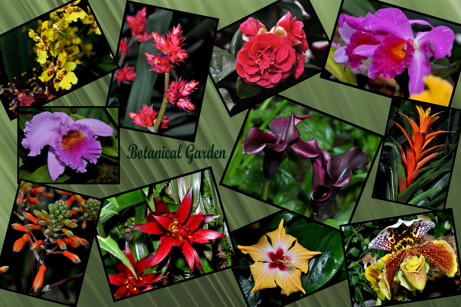 botanischer garten chemnitz foto bild pflanzen pilze flechten bl ten kleinpflanzen. Black Bedroom Furniture Sets. Home Design Ideas