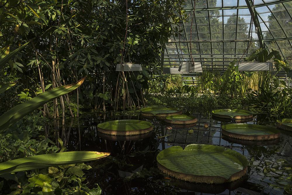 Botanischer Garten der Uni Basel 23