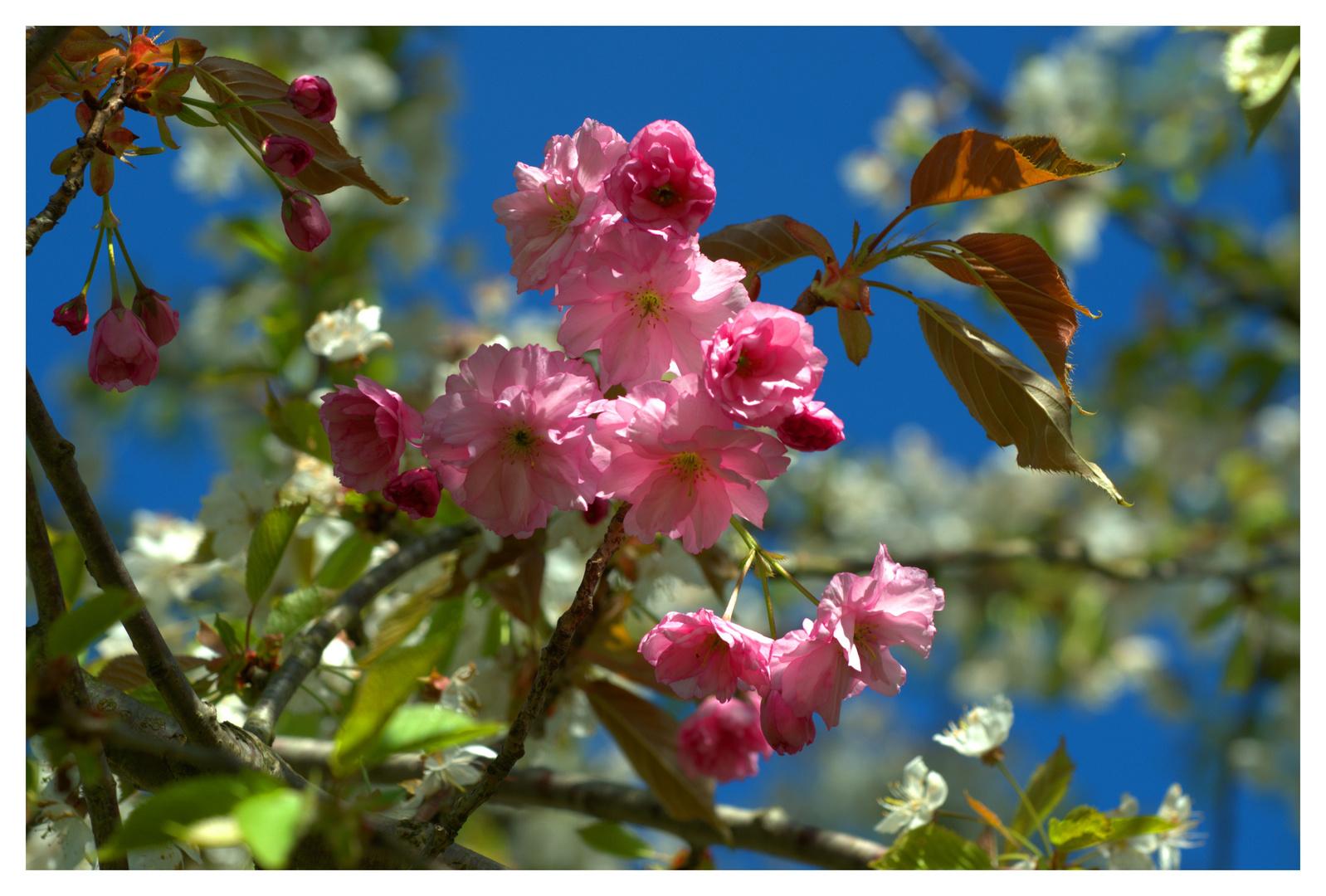 Botanischer Garten Frankenburg 21.04.2014