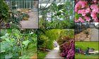 Botanischer Garten Genf (2)