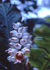Botanischer Garten in Hawai'i