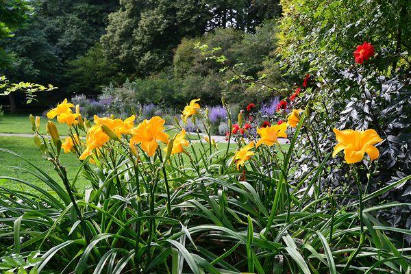 Botanischer Garten in Visby