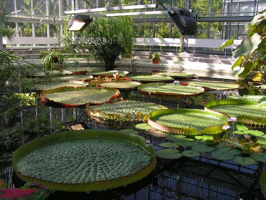 botanischer garten leipzig 1 foto bild deutschland europe sachsen bilder auf fotocommunity. Black Bedroom Furniture Sets. Home Design Ideas