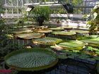 Botanischer Garten Leipzig -1-