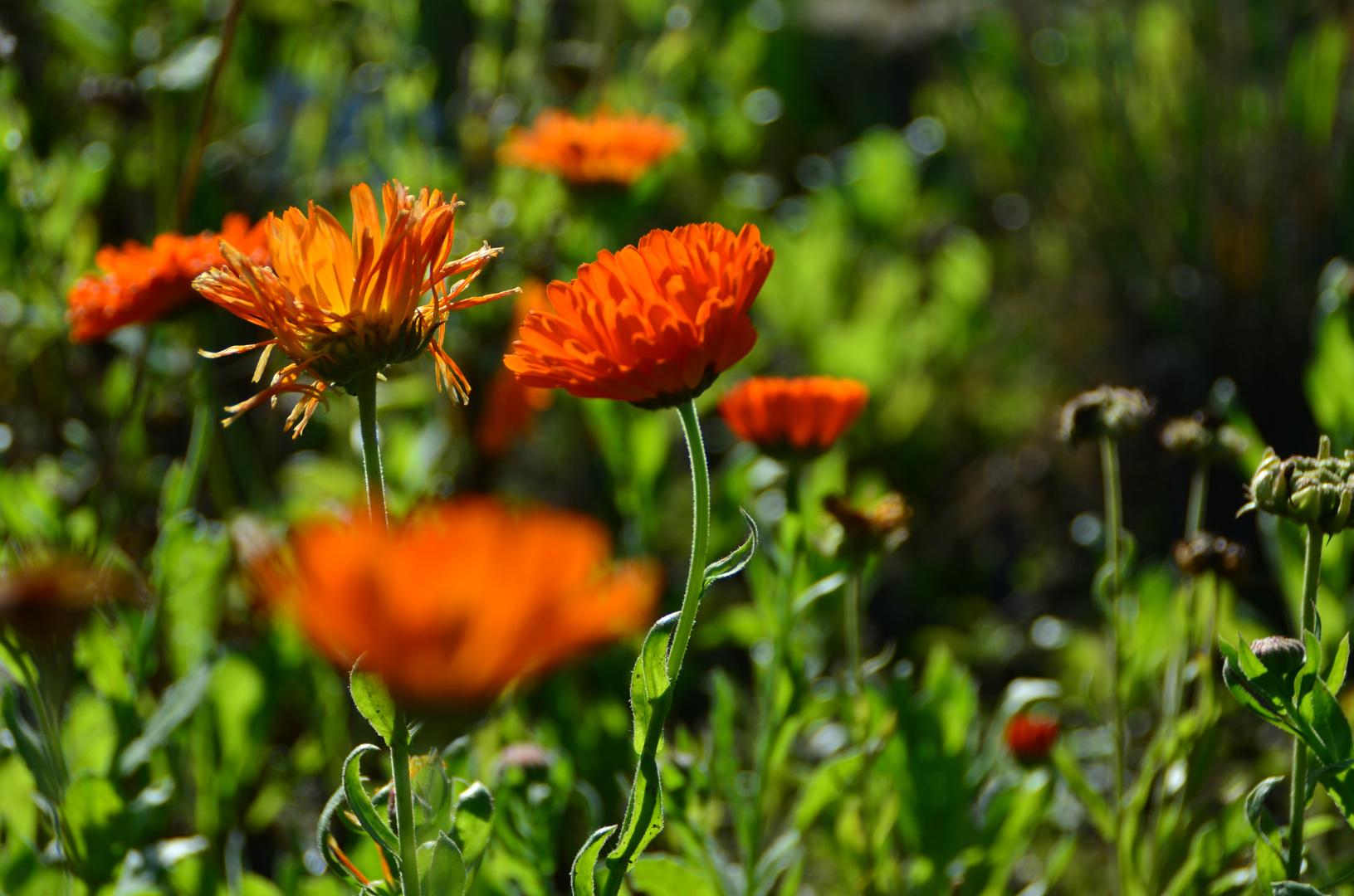 Botanischer Garten Os