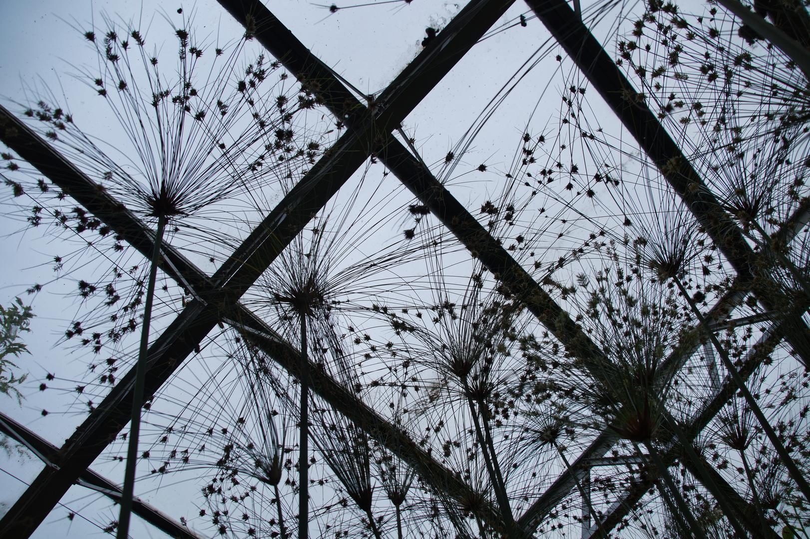 Botanischer Garten Oxford_7