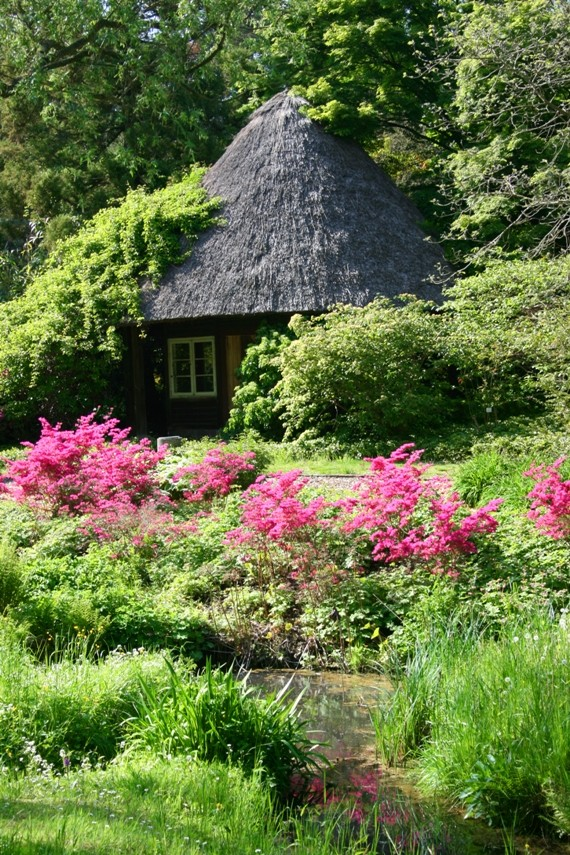 botanischer garten rostock foto bild landschaft garten parklandschaften natur bilder. Black Bedroom Furniture Sets. Home Design Ideas