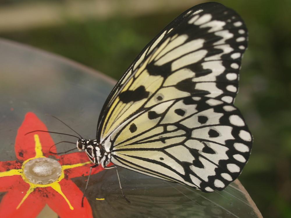 Botanischer Garten-Schmetterlinghaus 1