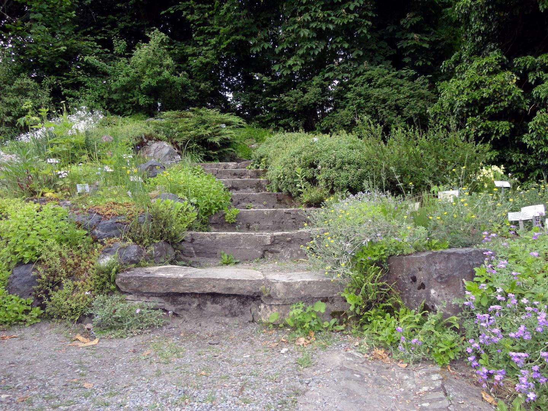 botanischer garten treppe 2 foto bild sonstiges natur bilder auf fotocommunity. Black Bedroom Furniture Sets. Home Design Ideas