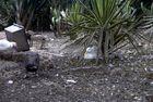 Botanischer Garten von Funchal
