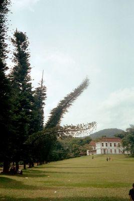 Botanischer Garten von Peradeniya