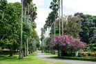 Botanischer Garten von Peradeniya 2