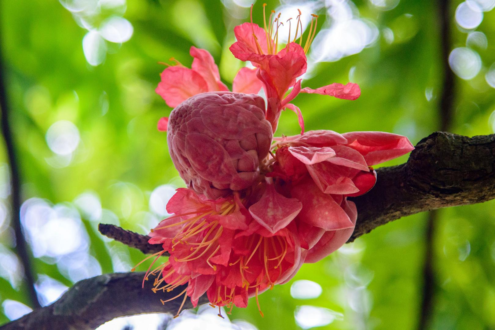 Botanischer Garten von Peradeniya 4