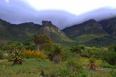 Botanischer Garten vor Kapstadt