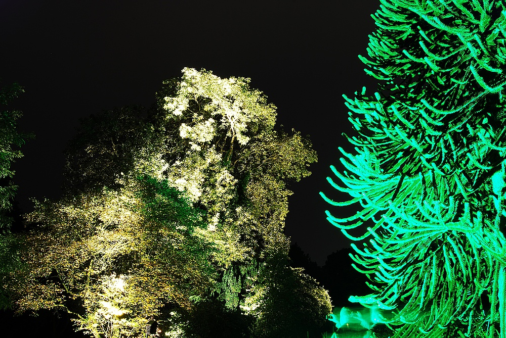 Botanischer Garten Wuppertal II