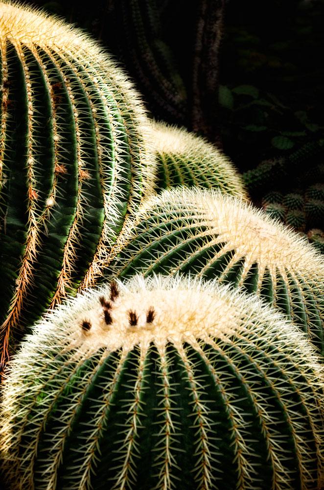 Botanischer Garten...#03 - Schwiegermutterstühle