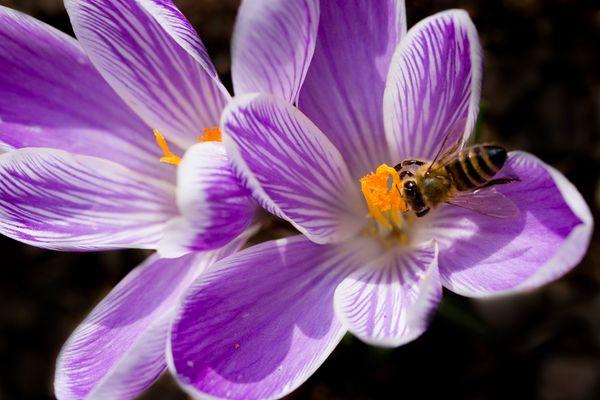Boten des Frühlings 1