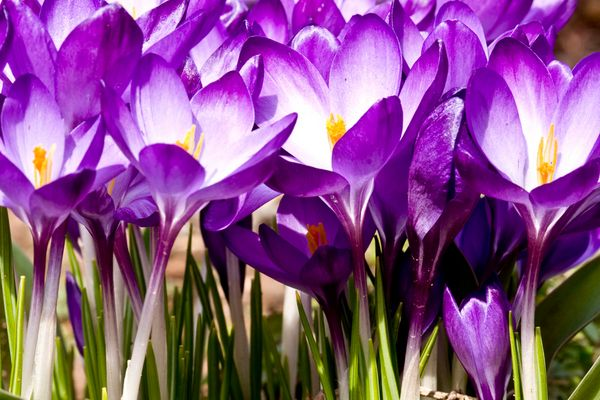 Boten des Frühlings 5