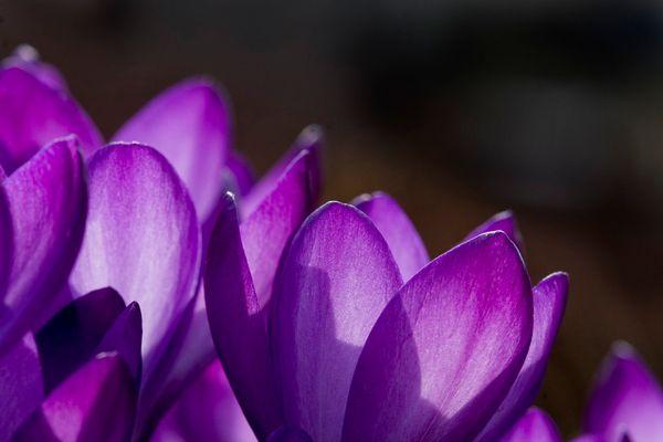 Boten des Frühlings 6