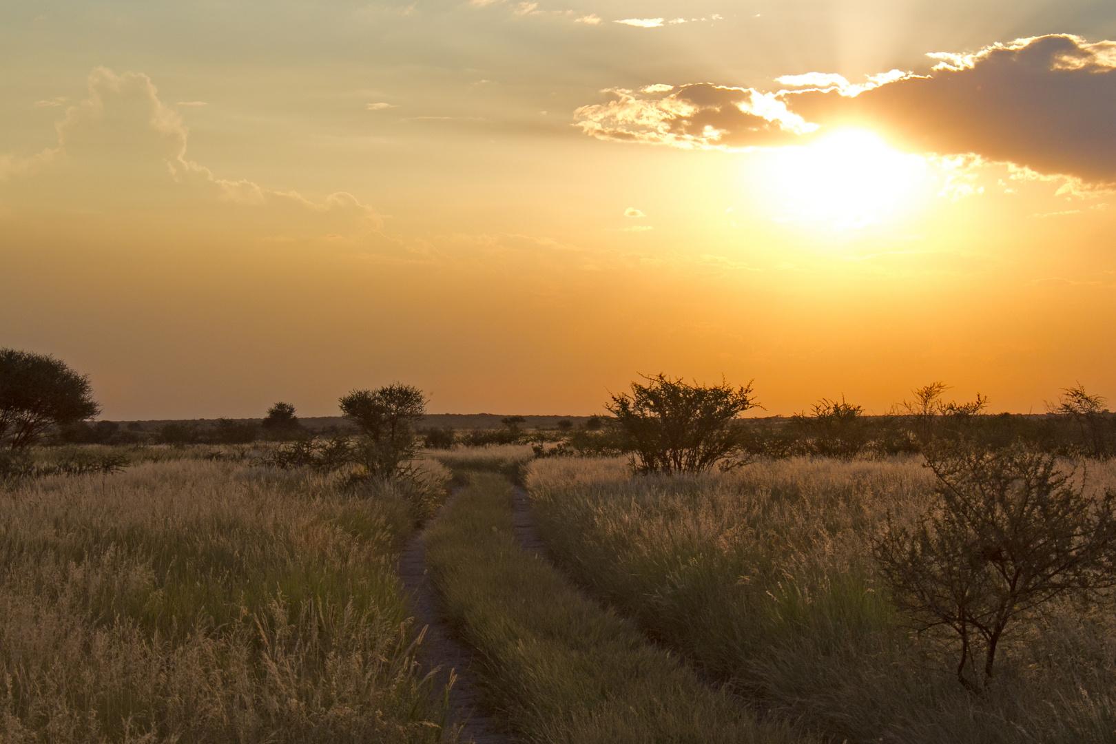 Botswana - Kalahari (1)