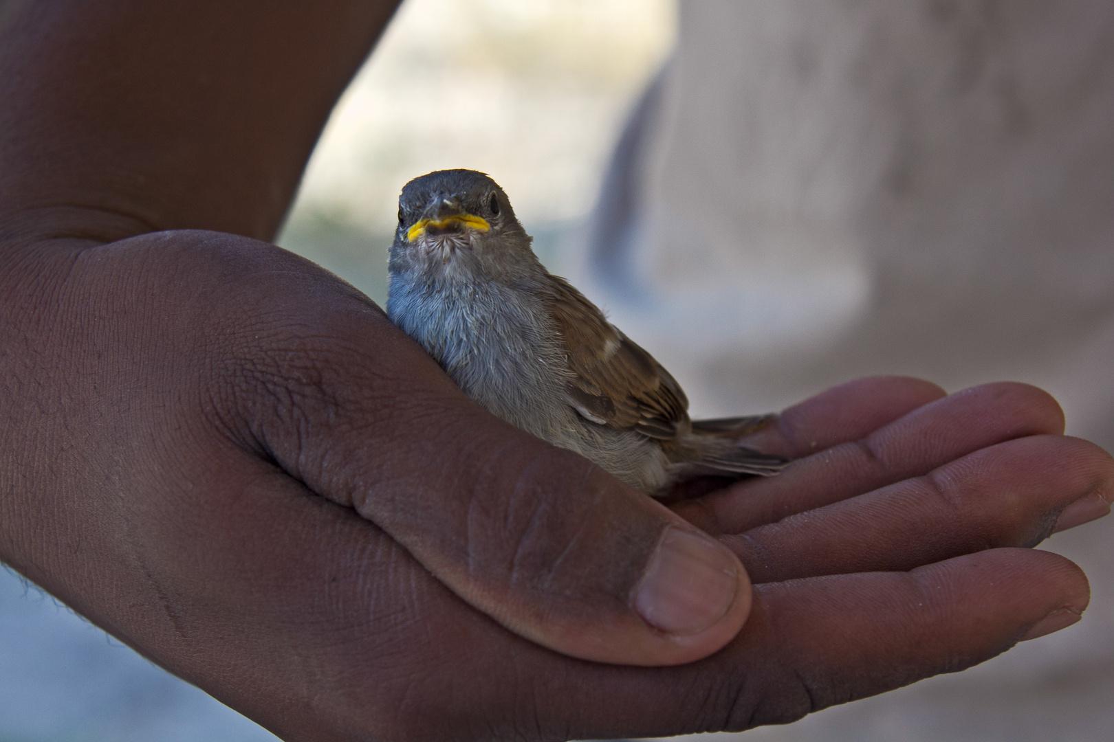 Botswana - Kalahari (11)