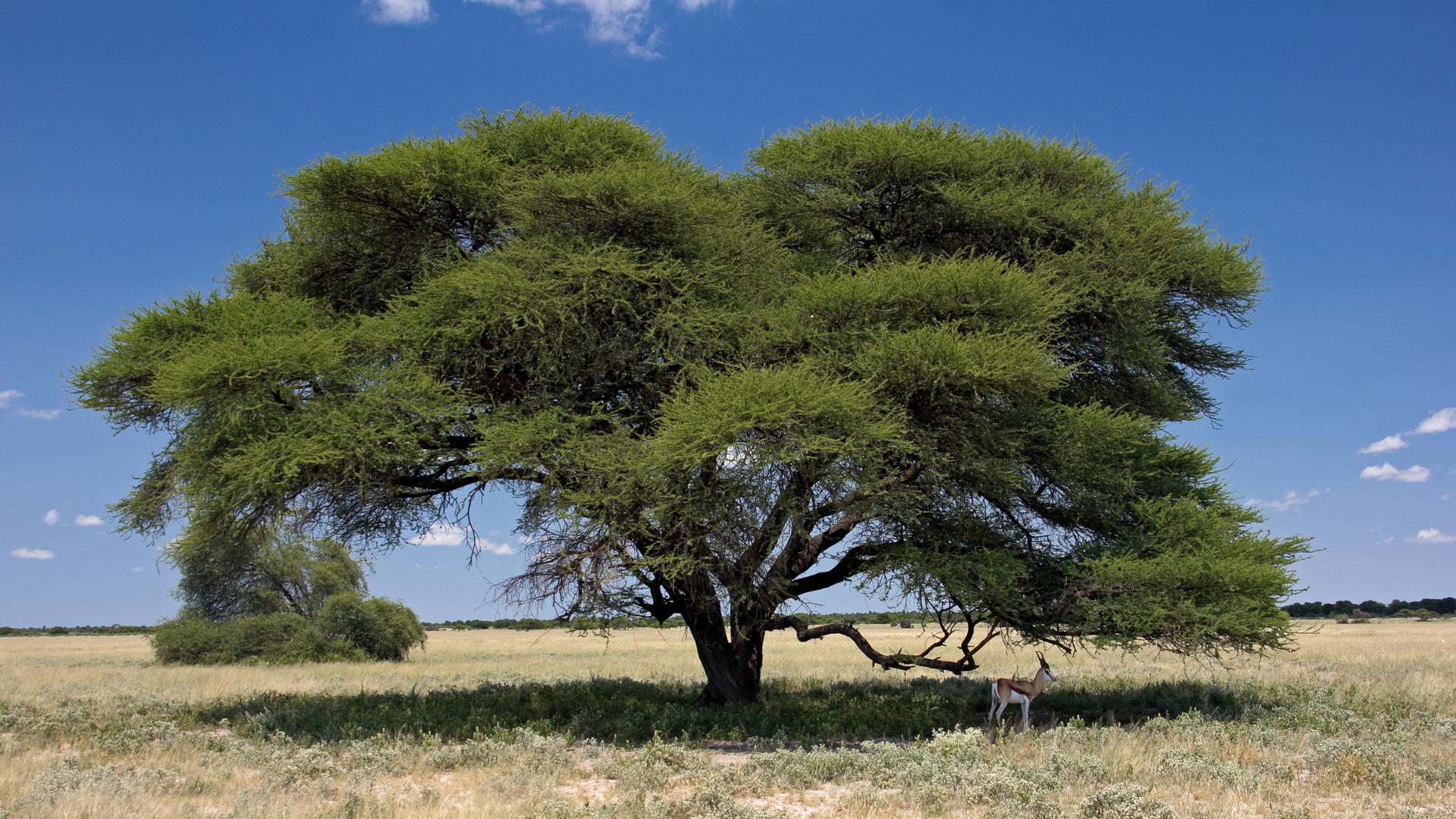 Botswana - Kalahari (5)