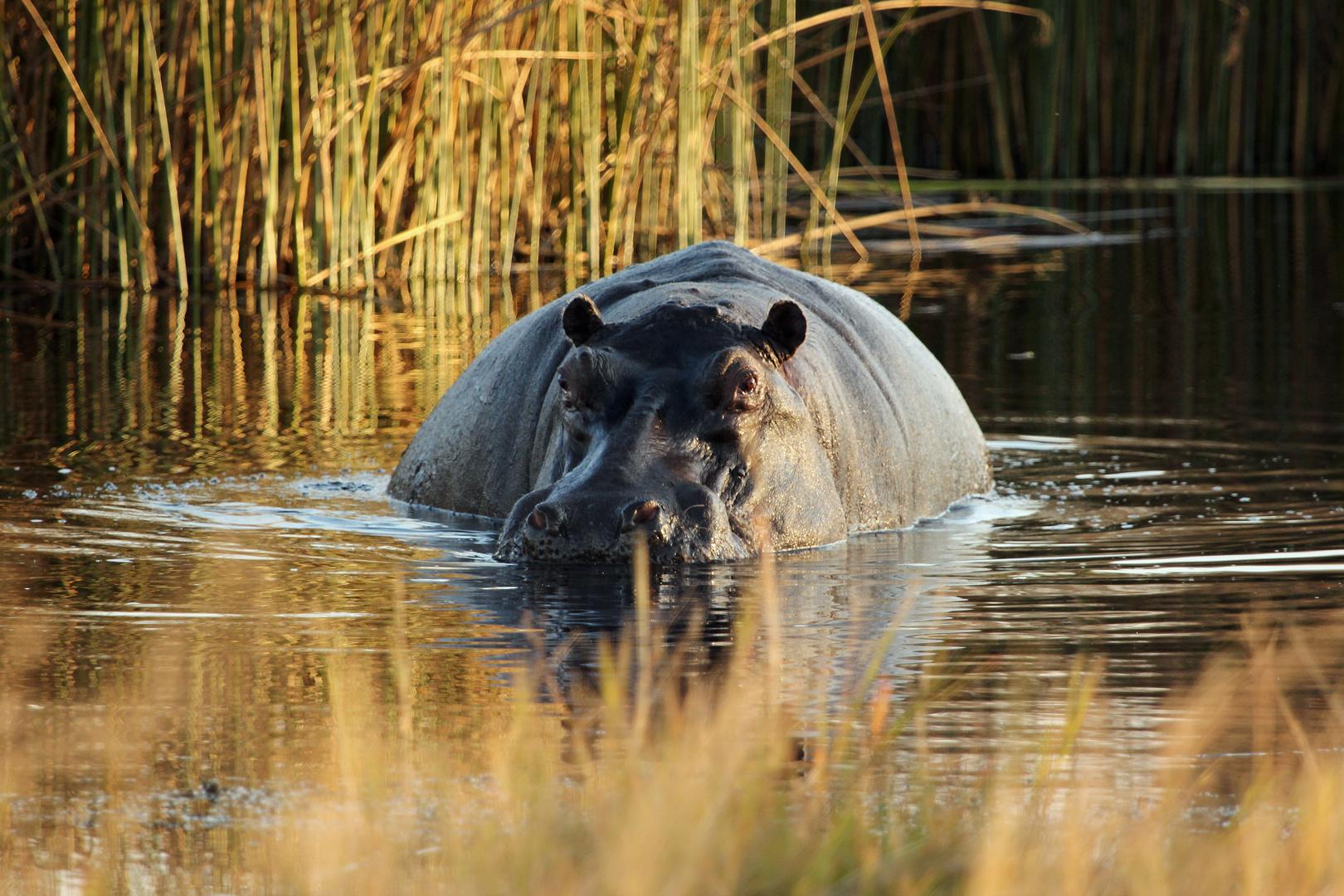 Botswana - Moremi