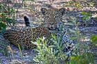 Botswana - Moremi Game Resort (12)