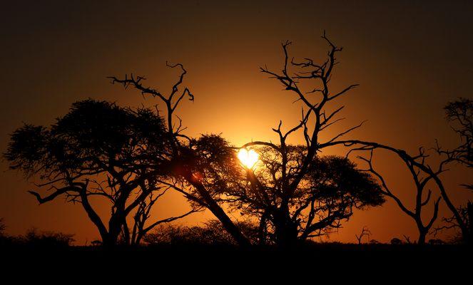 Botswana Savuti Nationalpark