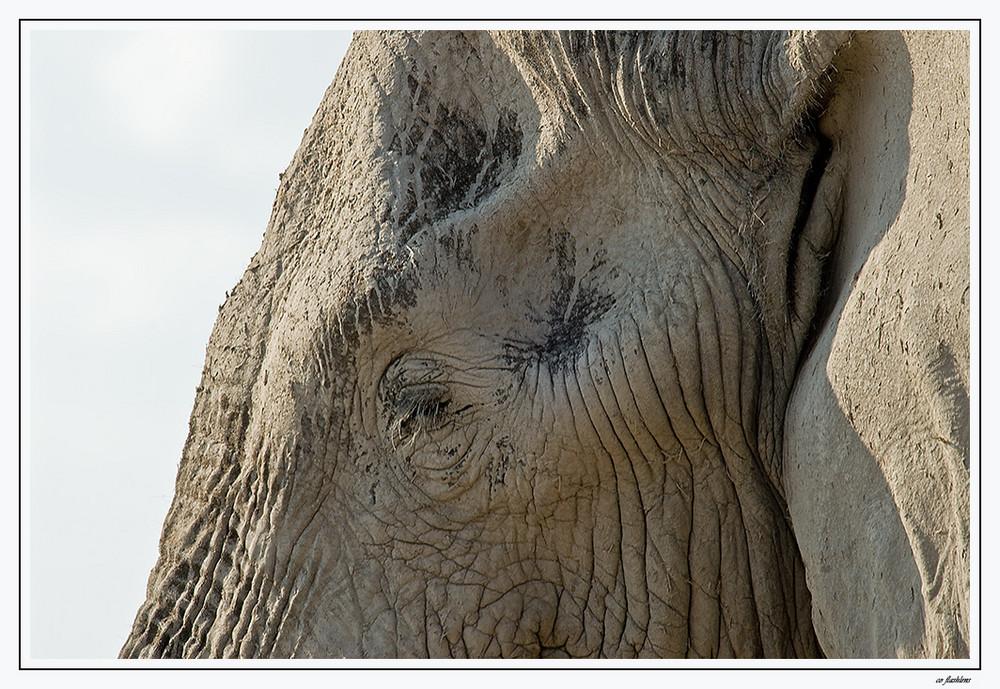 Botswana's Elefanten VI