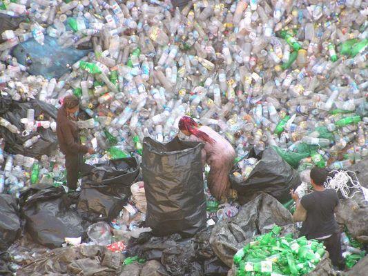 bottlesfield