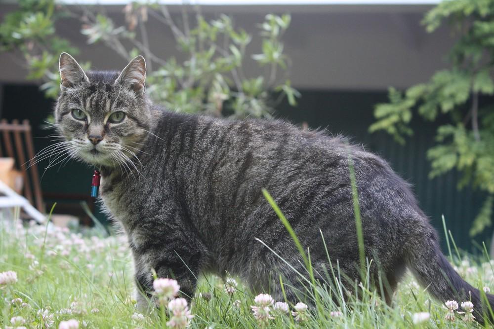 Bouba dans son jardin
