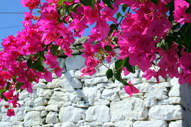 bougainvillea foto bild europe greece rhodos bilder. Black Bedroom Furniture Sets. Home Design Ideas