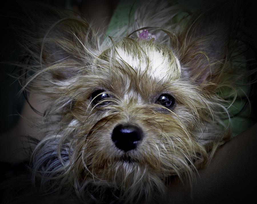 Bouille de chien
