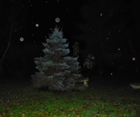Boules de Noël... le soir du 1er décembre, en Auvergne