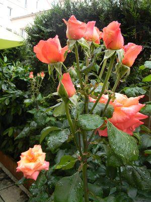 Bouquet de Roses!!!