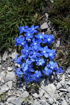 Bouquet montagnard