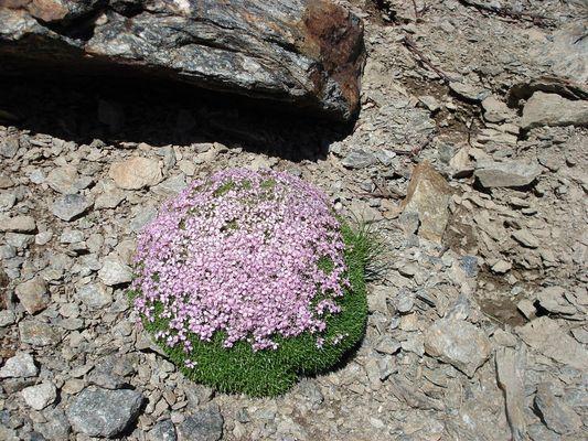 bouquet naturel de fleur