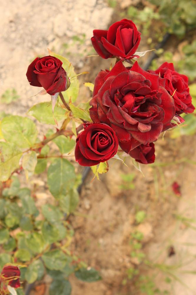 Bouquet pour vous !!!