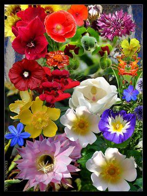 Bouquet virtuel de fleurs