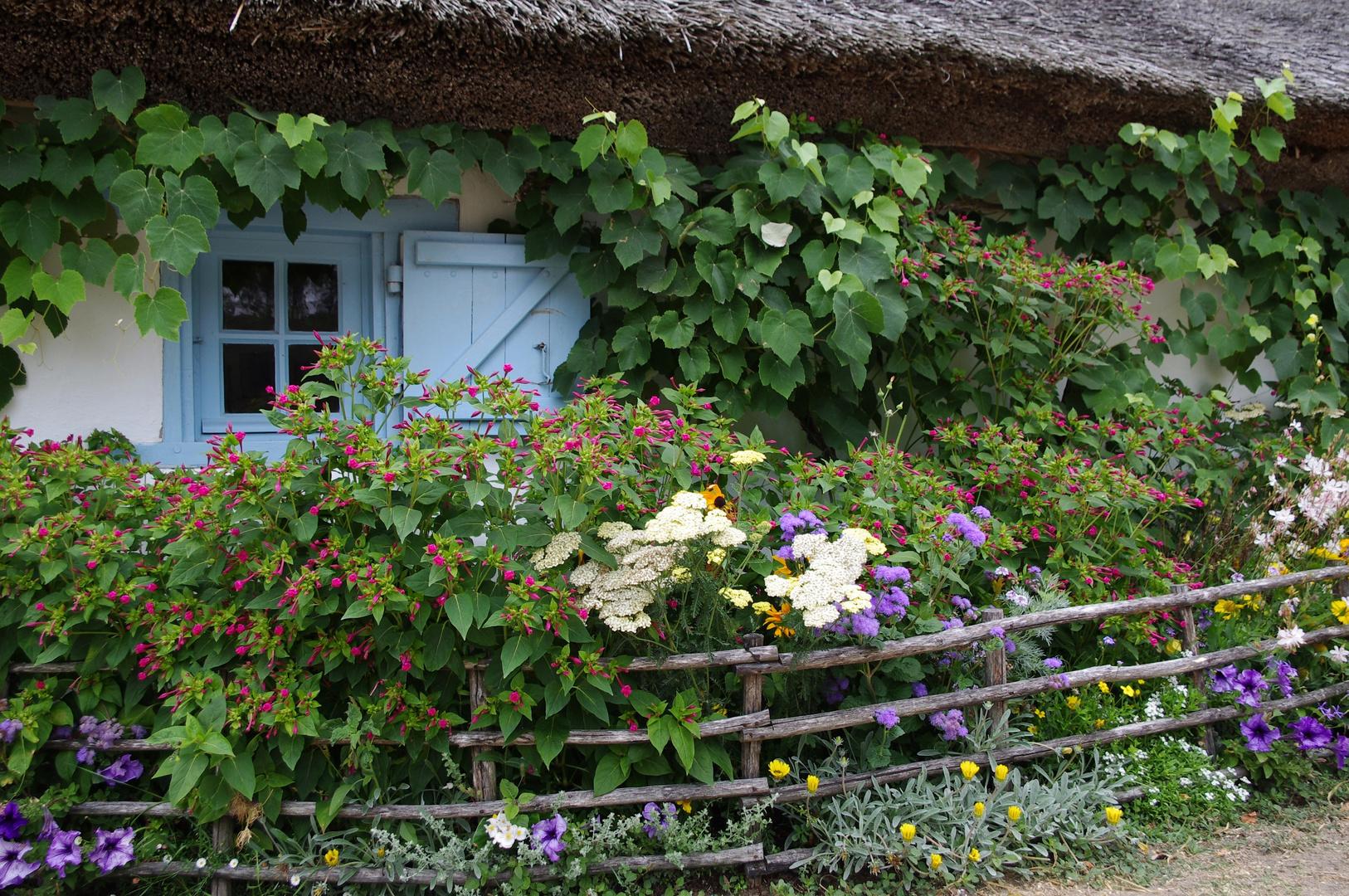 Bourrine fleurie