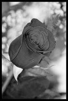 Bouton ...noir !!??? ;)