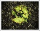 bowl of grass