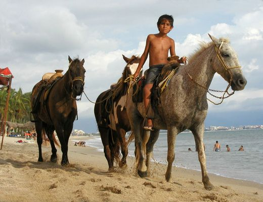 Boy and Horses 1